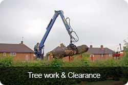 treework-clearance-button.jpg