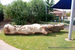 This mighty oak trunk was given a new lease of life with a beautifully carving of a woodland wildlife scene for the children of a school nursery to enjoy for many generations to come.